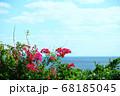 南国の海とブーゲンビリア 68185045