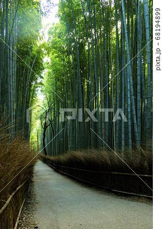 人のいない竹林の小径 京都市嵐山 68194899