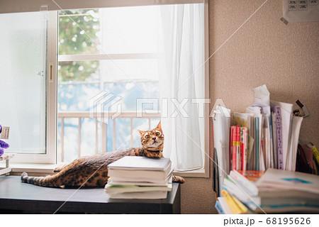 窓際でくつろぎながら振り向く子猫 ベンガル 68195626