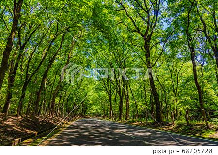 森林の中の一本道 68205728