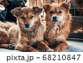 Unwanted and homeless dogs of different breeds in 68210847