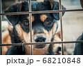 Portrait of sad dog in shelter behind fence 68210848