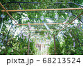 風鈴と緑のトンネル(奈良県・おふさ観音) 68213524