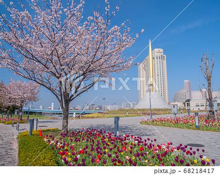 4月東京・お台場 シンボルプロムナード公園セントラル広場の桜とチューリップ 68218417