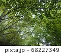 イタリア田舎の木漏れ日 68227349