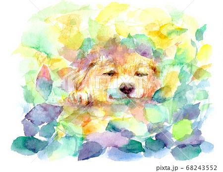 水彩で描いたお昼寝する犬のイラスト 68243552