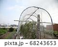 トマト雨除け栽培 68243653