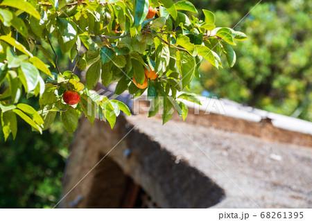 備北丘陵公園ひばの里 茅葺屋根と柿の実 68261395