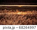 秋の日暮れのススキ野原 68264997