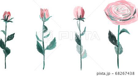 薔薇のドライフラワー 68267438