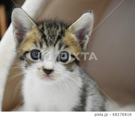 段ボール箱に入れられ捨てられた子猫 68276816