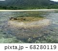石垣島の透明な海とサンゴ 68280119