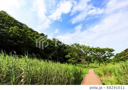 関東の秘境快晴の湘南三浦半島小網代の森(湿原) 68291011