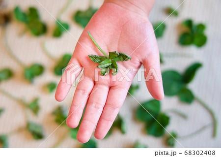 子供の手の平に六つ葉のクローバー 68302408