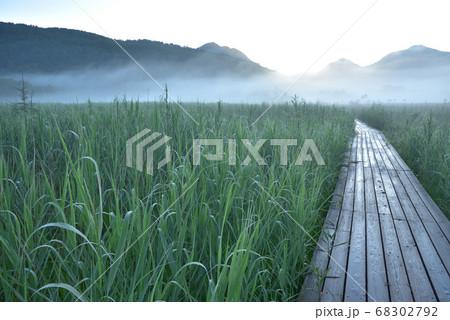 日の出前の朝霧の漂う夏の戦場ヶ原と木道 68302792