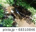 静岡 柿田川公園 湧き水 写真 68310846