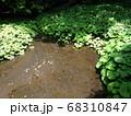 静岡 柿田川公園 湧き水 写真 68310847