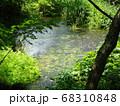 静岡 柿田川公園 湧き水 写真 68310848