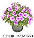 サフィニア 紫 ペチュニア イラスト 68321554