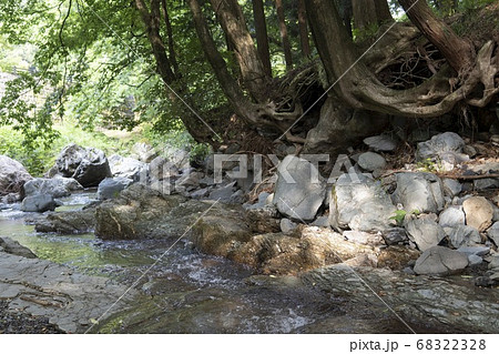 根元が曲がった木と河原の岩/越生町(埼玉県) 68322328