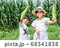 トウモロコシの収穫をする小学生 68341838