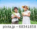 トウモロコシの収穫をする小学生 68341858
