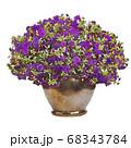 サフィニア 紫 ペチュニア イラスト 68343784