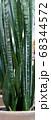 サンセベリアの蕾み 68344572