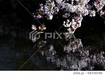 川面に垂れ下がる桜の花と水面の反映 68348396
