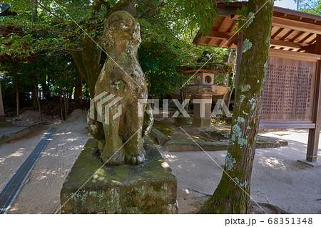 縁結びの神様 松江市八重垣神社の拝殿付近の古い狛犬(獅子) 68351348