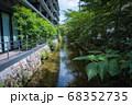 京都、高瀬川と新緑の風景 68352735