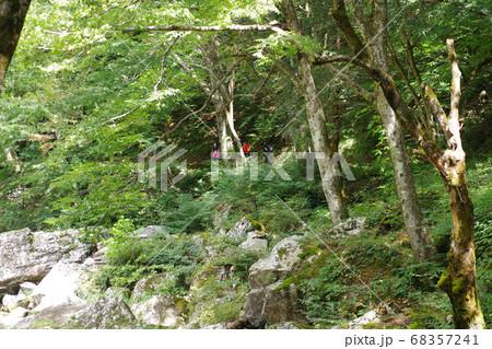 三段峡グリーンシャワーとトレッキングする人の影 68357241