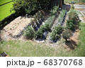 夏の家庭菜園 68370768