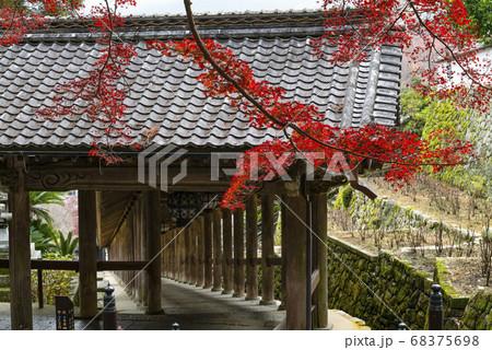 奈良 秋の長谷寺、もみじと登廊繋屋 68375698