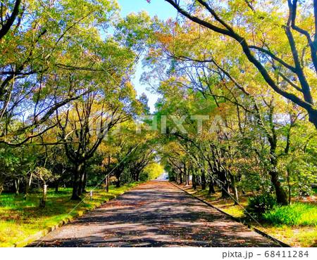 ジョギングに最適な緑地公園の正面から見た樹木のアーチ 68411284