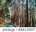 登山道の林の木漏れ日 68413007