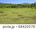 北海道倶知安町の鏡沼のワタスゲの群落とワイスホルン 68420576