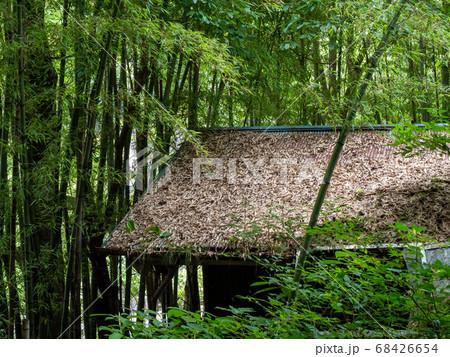 秋川渓谷の滝と清流 華水の滝へ向かう山道にあるササの葉に覆われた小屋の屋根 68426654