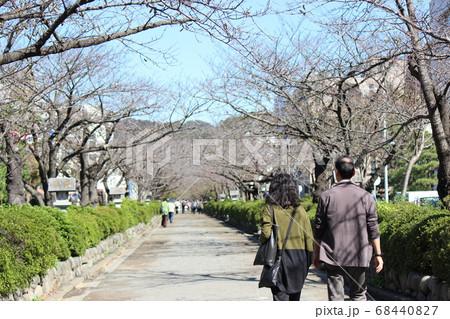 鎌倉鶴岡八幡宮までの参道を歩く着物の熟年夫婦 68440827