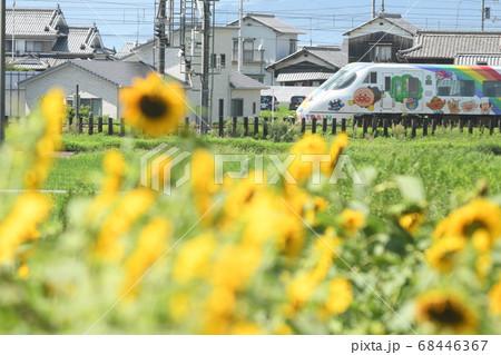 アンパンマン特急列車の手前にひまわり畑 68446367