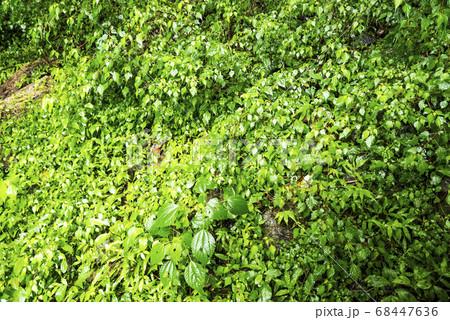 雨に濡れた一面に生えた雑草の風景 68447636