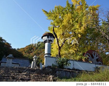 秋晴れに黄色く輝く山寺のイチョウ 68448311