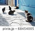 ハマメットのメディナで日向ぼっこをしながら猫会議 68454005