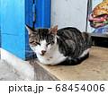 シディ・ブ・サイドのバンバローニ店で店番をする猫 68454006