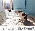 ハマメットのメディナで日向ぼっこする猫たち 68454007
