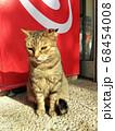世界遺産カルタゴ遺跡内のビュルサの丘に住む猫 68454008