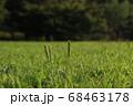 夏の太陽の陽をあびる公園の草 68463178