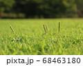夏の太陽の陽をあびる公園の草 68463180
