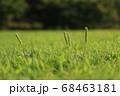 夏の太陽の陽をあびる公園の草 68463181