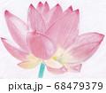 大輪のハスの花のパステル画 68479379